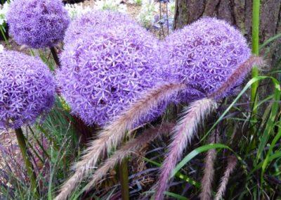 Bezoek aan Bloem & Tuin