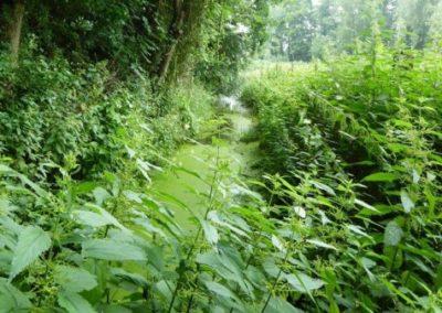 IVN-wandeling Ommetje door Aarle-Rixtelse Beemden (1)