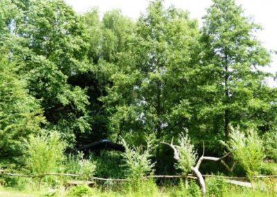 IVN-wandeling Ommetje door Aarle-Rixtelse Beemden (15)