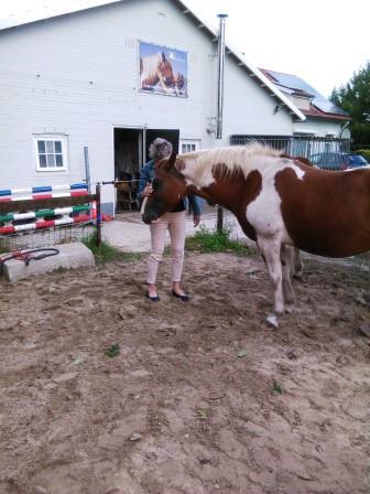 Workshop Coaching met Paarden (1)