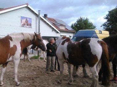 Coaching met Paarden bij Dymphy & co