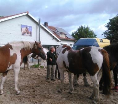 Workshop Coaching met Paarden (2)