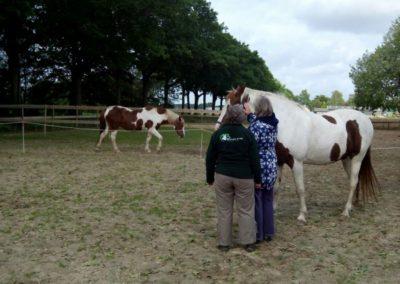 Workshop Coaching met Paarden (4)